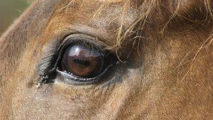 US horse slaughterhouse